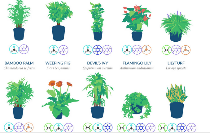 18 Plants That Purify Indoor Air In One Picture