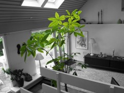 Four Plants That Will Improve Your Home's Air Quality