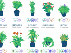18 Plants That Purify Indoor Air, In One Picture